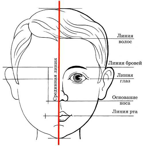 Пропорции лица ребенка